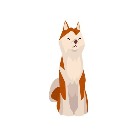 Shiba Inu Dog, Cute Sitting Brown Beige Fluffy Pet Animal, Front View Vector Illustration  イラスト・ベクター素材