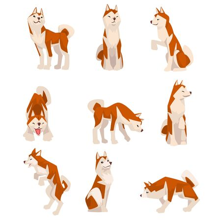 Shiba Inu Dog in Various Poses Set, Cute Japan Brown Beige Fluffy Pet Animal Vector Illustration