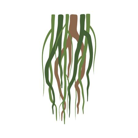 Tropical Liana Stems, Vines, Jungle Plant Decorative Element, Rainforest Flora Vector Illustration