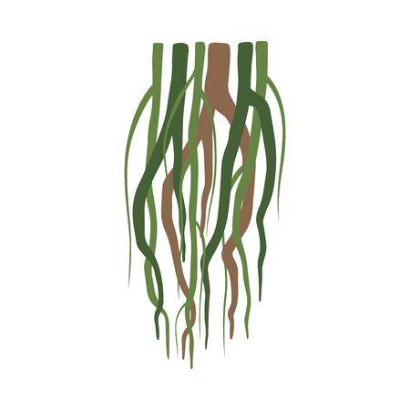 Tropical Liana Stems, Vines, Jungle Plant Decorative Element, Rainforest Flora Vector Illustration
