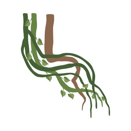 Liana Winding Branches with Leaves, Jungle Plant Decorative Element, Rainforest Flora Vector Illustration Zdjęcie Seryjne - 126999636