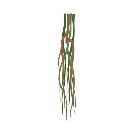 Liana Stems Jungle Plant Decorative Element, Rainforest Flora Vector Illustration Zdjęcie Seryjne - 126999645