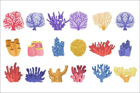 Different Types Of Tropical Reef Coral Collection Of Detailed Realistic Vector Illustrations On White Background Çizim