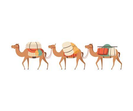 Caravana de camellos, animales del desierto caminando con carga, ilustración vectorial de vista lateral sobre fondo blanco.