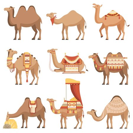 Camels Set, Desert Animals with Bridles and Saddles Decorated with Ethnic Ornament Vector Illustration