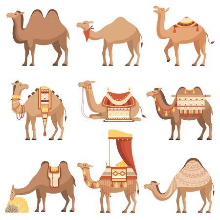 Conjunto de camellos, animales del desierto con bridas y sillas de montar decoradas con adornos étnicos ilustración vectorial
