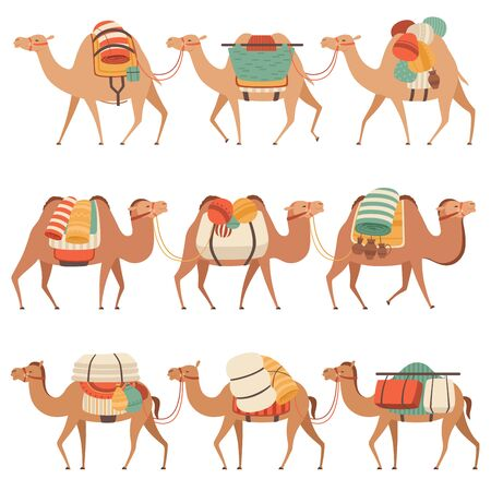 Camels Set, Desert Animals Walking with Heavy Load, Side View Vector Illustration 일러스트