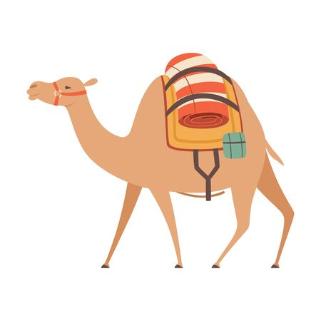 Dromedary, One Humped Camel with Saddle and Load, Side View Vector Illustration