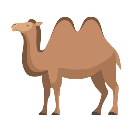 Camel, Two Humped Desert Animal, Side View Vector Illustration  イラスト・ベクター素材