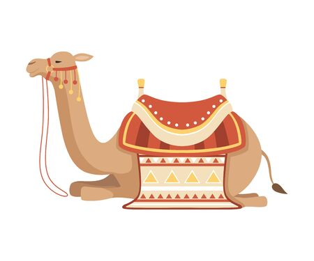 Lying Camel, Two Humped Desert Animal with Bridle and Saddle Decorated with Ethnic Ornament Vector Illustration on White Background.