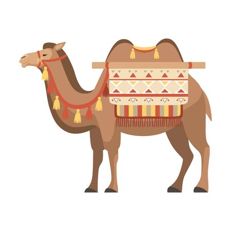 Camel, Two Humped Desert Animal with Bridle and Saddle Decorated with Ethnic Ornament Vector Illustration