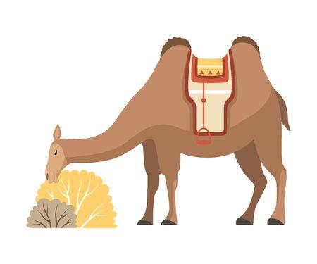 Camello, animal del desierto de dos jorobas con brida y silla de montar comiendo heno ilustración vectorial Ilustración de vector