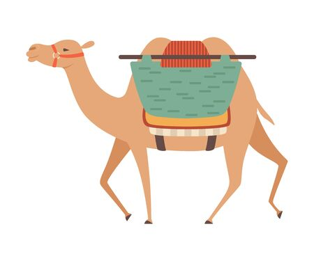 Camel with Bridle and Saddle, Two Humped Desert Animal with Load, Side View Vector Illustration on White Background.