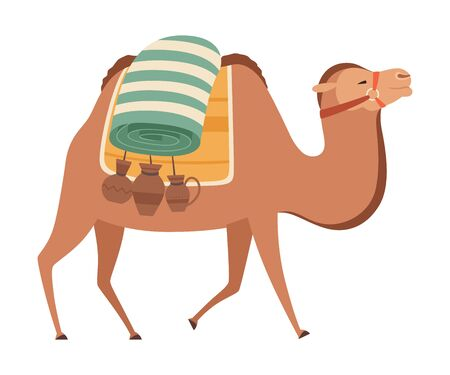 Camel, Two Humped Desert Animal Walking with Load, Side View Vector Illustration on White Background. Çizim