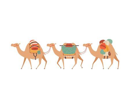 Caravan of Camels, Desert Animals Walking with Heavy Load, Side View Vector Illustration on White Background.