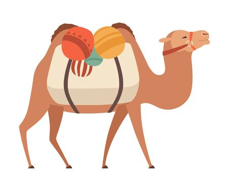 Camel, Two Humped Desert Animal with Load, Side View Vector Illustration on White Background. Çizim
