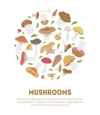Poisonous and Edible Mushrooms Banner Template with Space for Text, Vegetarian Organic Natural Food Vector Illustration, Web Design.