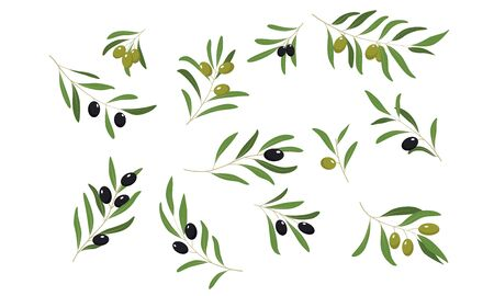 Olive Tree Branches Set, Eco Healthy Organic Products or Cosmetics Design Element Vector Illustration