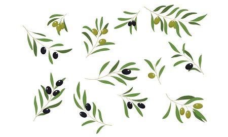 Set di rami di ulivo, prodotti biologici sani eco o cosmetici elemento di design illustrazione vettoriale