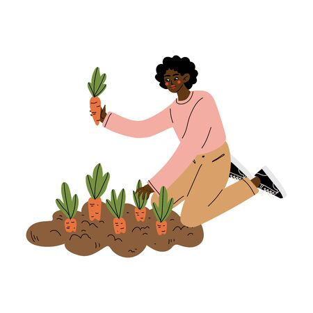 African American Woman Pulling Carrots from the Ground, Female Farmer Working in Garden Vector Illustration on White Background. Ilustracja