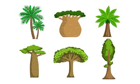 Jungle Trees and Palms Set, Tropical Forest Plants Vector Illustration