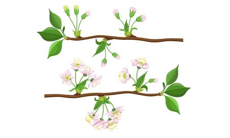 Blooming Tree Branches Set, Apple or Cherry Flower Blossom Stages Vector Illustration
