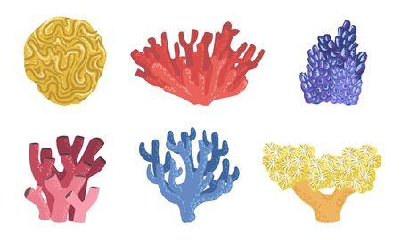 Sea Aquatic Plants Set, Colorful Underwater Seaweeds and Marine Algae Vector Illustration
