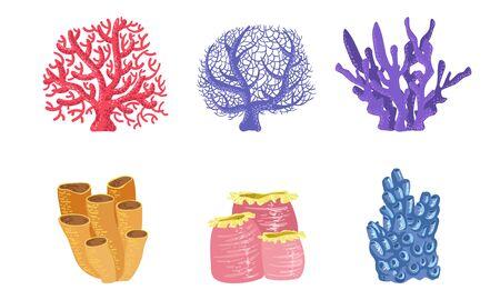 Underwater Plants Set, Colorful Seaweeds and Marine Algae Vector Illustration