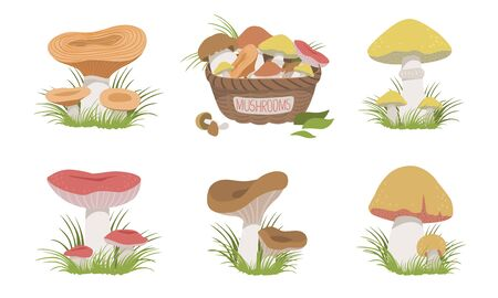 Collection of Wild Forest Mushrooms Set, Edible Mushrooms Vector Illustration