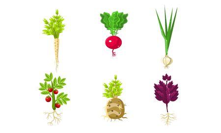 Set di verdure con foglie e radici, illustrazione vettoriale di cibo sano biologico