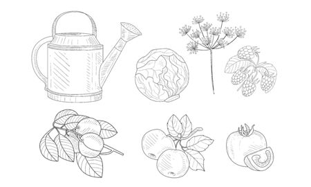 Garden Elements Set, Watering Can, Cabbage, Dill, Raspberry, Apricot and Apple Branches, Pomegranate Black and White Hand Drawn Vector Illustration Ilustração