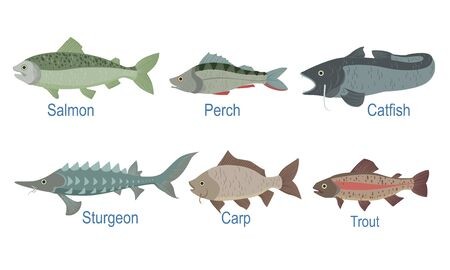 Collection of Fish Species with Name Subscription, Salmon, Perch, Catfish, Sturgeon, Carp, Trout Vector Illustration