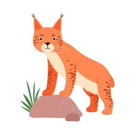 Lynx next to the stone. Vector illustration on a white background.