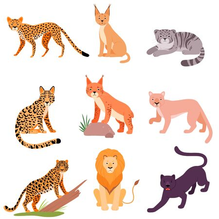 Set of different wild cats. Vector illustration on a white background.