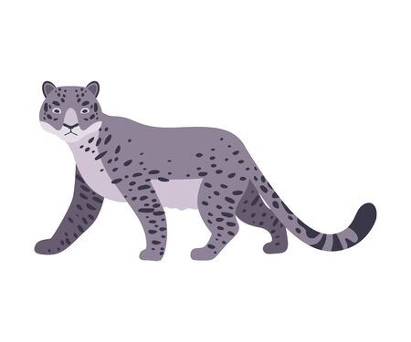 Snow Leopard. Vector illustration on a white background.