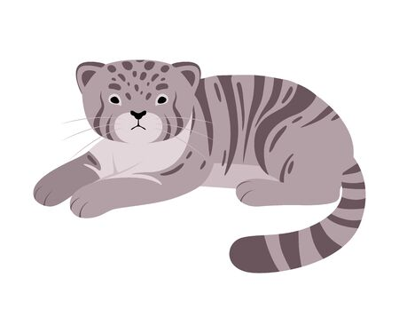 Gray manul. Vector illustration on a white background.