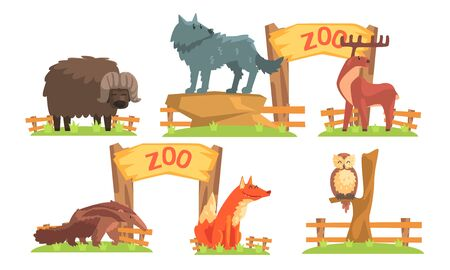 Animals in the Zoo Set, Bison, Wolf, Deer, Ant Eater, Fox, Owl Vector Illustration