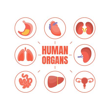 Human Organs Banner Template with Internal Organs, Healthcare and Medical Vector Illustration