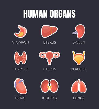 Human Organs Banner Template with Internal Organs, Stomach, Uterus, Spleen, Thyroid, Bladder, Heart, Kidneys, Lungs, Liver, Healthcare and Medical Vector Illustration Web Design
