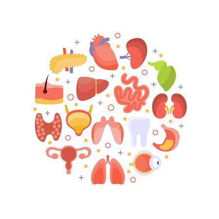 Human Iinternal Organs of Round Shape, Healthcare and Medical Vector Illustration, Web Design.