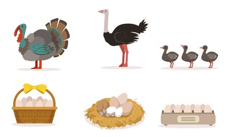 Poultry Farm With Turkey, Ostrich, Little Birds And Eggs Vector Illustration Set Isolated On White Background