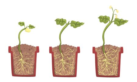Stages of sprout growth in a clay pot with soil. Vector illustration. Stock Illustratie
