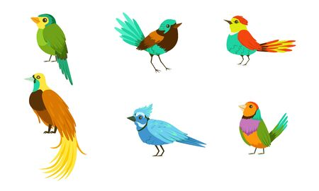 Set With Different Birds With Bright Colorful Plumage Vector Illustration Cartoon Character