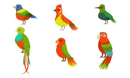 Tropical Birds Collection, Beautiful Birdies with Colored Plumage Vector Illustration on White Background.