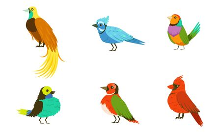 Tropical Birds Collection, Beautiful Birdies of Different Species with Colored Plumage Vector Illustration