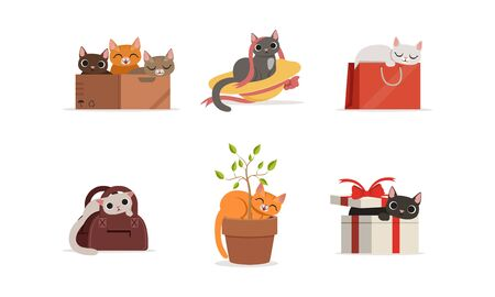 Different Domestic Cats Hiding and Resting in Various Places Vector Set