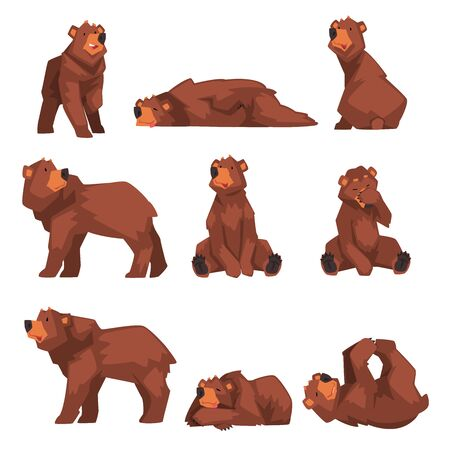 Cute Brown Bear Collection, Wild Forest Animal Character in Various Poses Vector illustration