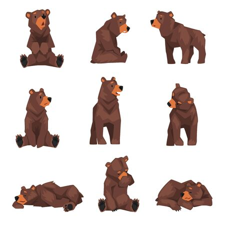 Cute Brown Grizzly Bear Collection, Wild Animal Character in Various Poses Vector illustration Illustration