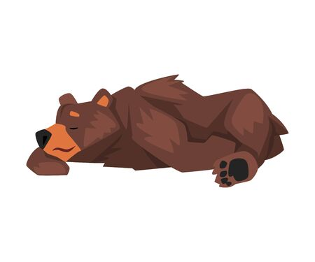Cute Sleeping Brown Grizzly Bear, Wild Animal Character Cartoon Vector illustration Illusztráció