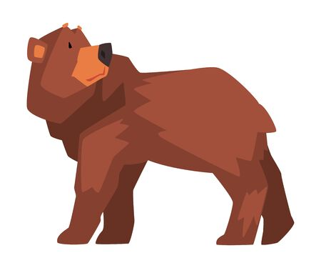 Brown Bear, Wild Forest Animal Character Cartoon Vector illustration on White Background.
